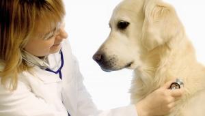 Per la prima volta in Italia riconosciuto permesso di lavoro per curare cane
