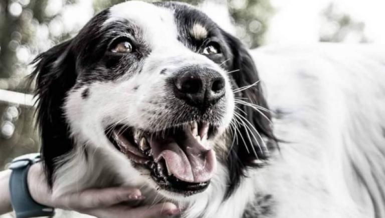 Manifestazione per il cane Snoopy ucciso a Livorno