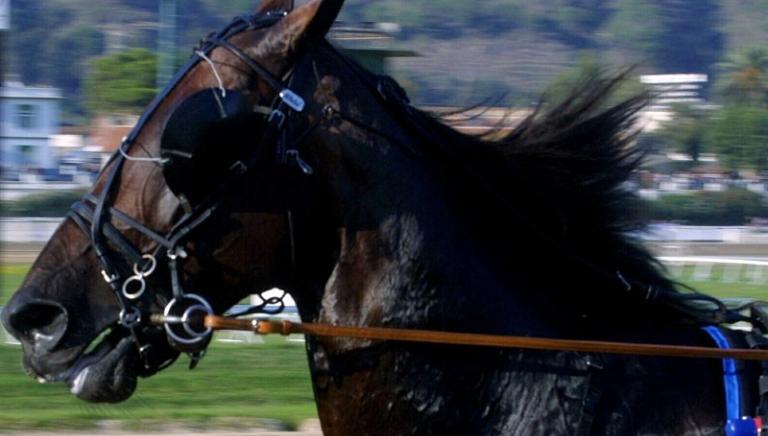Due cavalli muoiono a San Siro: nessuna fatalità, chiediamo autopsia