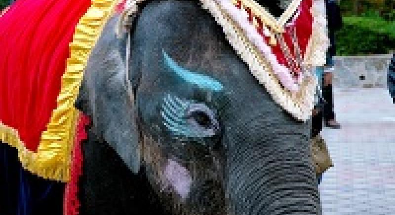"""""""Graduale superamento"""" del circo con animali: il Governo dovrà farlo in 3 anni"""