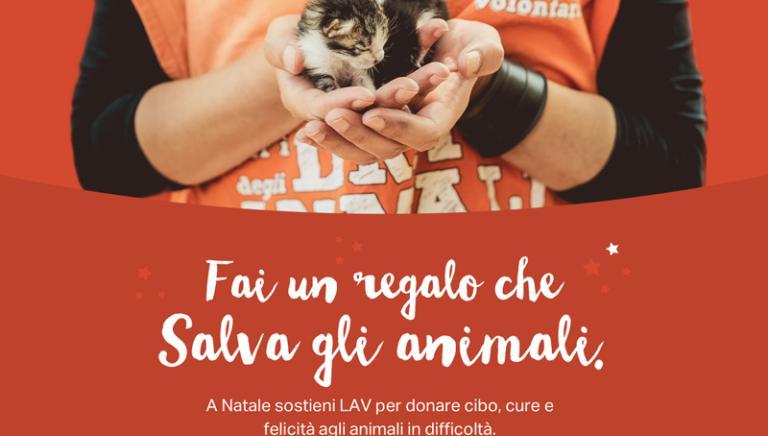 Anche a Natale, come sempre, i volontari LAV salvano, curano e proteggono gli animali in tutta Italia