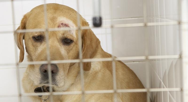 Maltrattamento e uccisione: Cassazione condanna veterinario già radiato