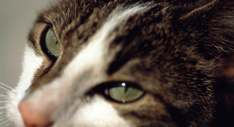 Lucca: condannato a un anno e sei mesi l'uccisore dei gatti della ex convivente