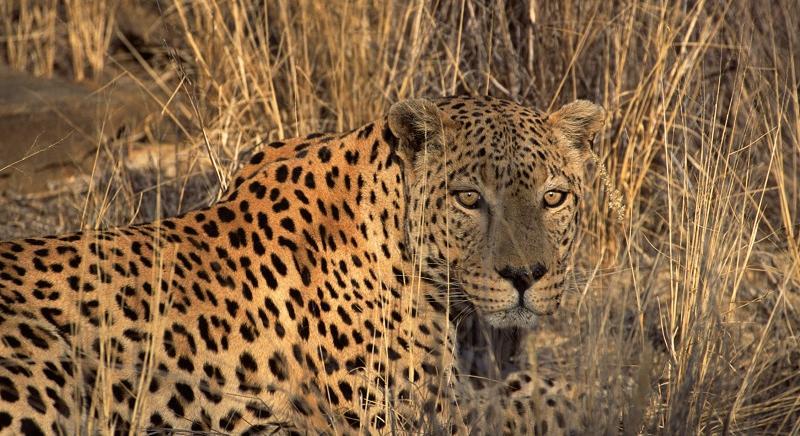 Oggi a presentazione Calendario CITES 2018, contro traffico specie protette