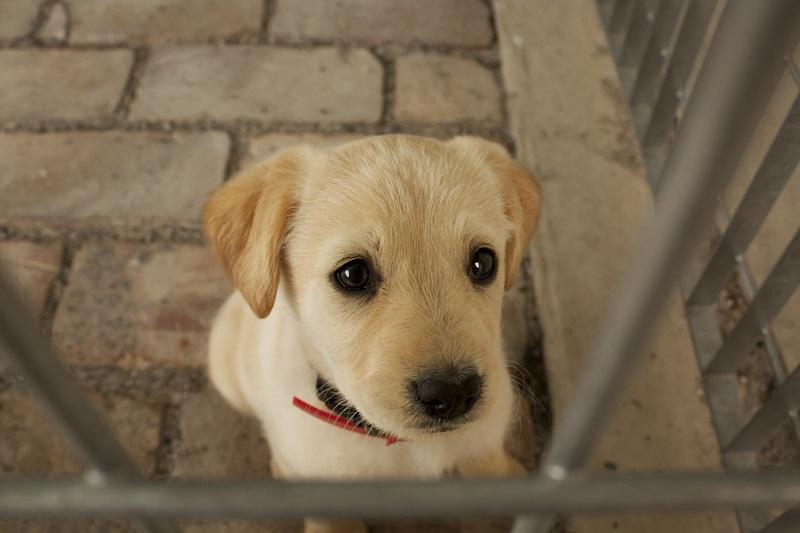 Cucciolo in un Canile - Foto di archivio (C) LAV