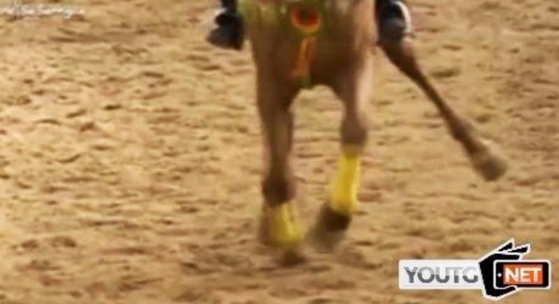 Sartiglia Oristano costa la vita a un cavallo: denunceremo i responsabili