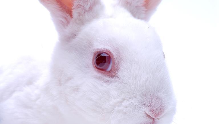 Test cosmetici su animali: UE apre la strada al divieto mondiale