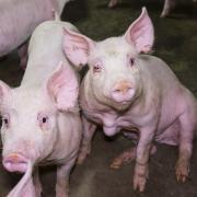 (C) LAV - Eurogroup For Animals