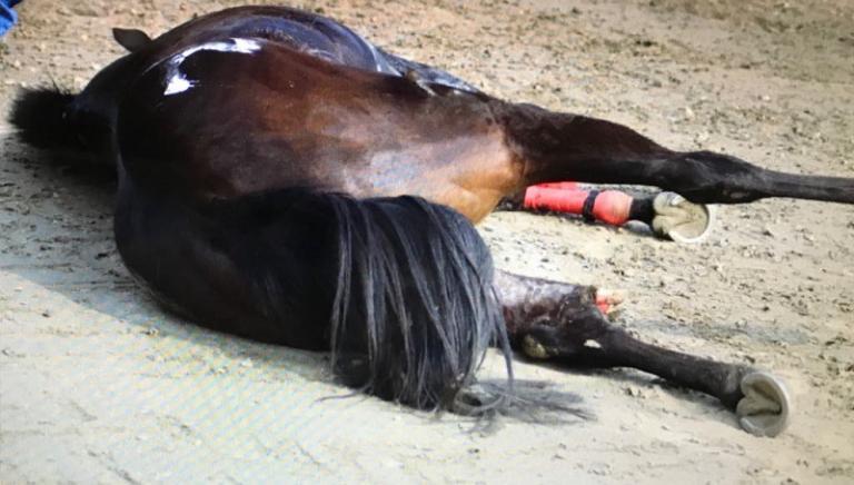 Legnano (MI): cavallo si frattura in pista, poi abbattuto. Accertare responsabilità