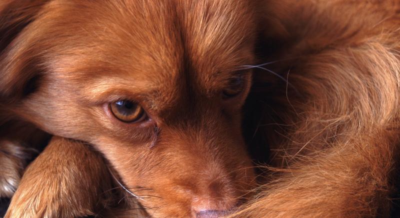 Il soccorso urgente di animali è stato di necessità anche per il Codice della strada