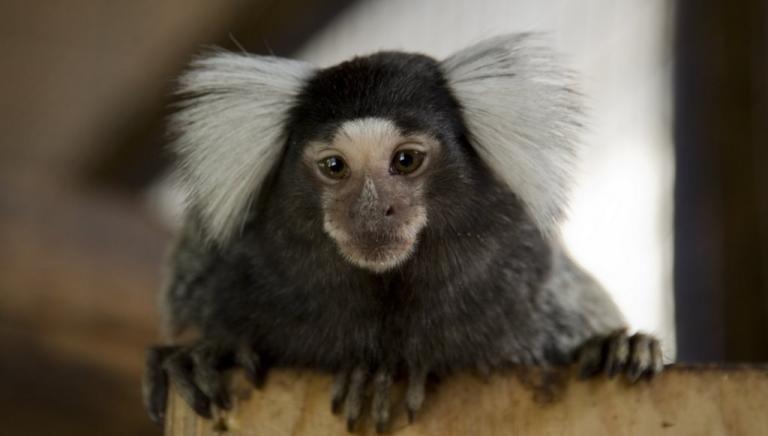 Roma: ricomincia da zero processo traffico cuccioli e scimmia uistitì. Noi parte civile