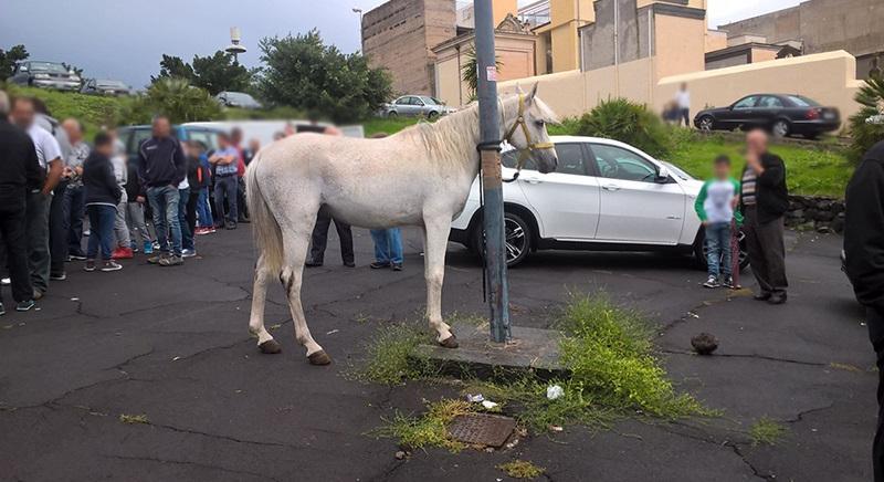 Fiera bestiame Biancavilla (Catania): udienza preliminare per aggressione