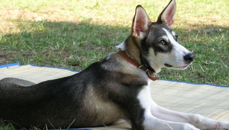 Gazoldo (Mantova): condannato a 8 mesi per aver sparato a un cane uccidendolo