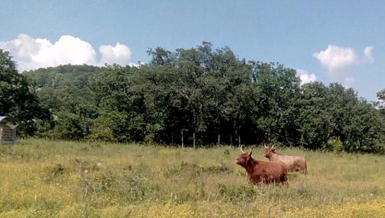 Accoglienza animali sequestrati: LAV inaugura due nuove aree dedicate nel Comune di Semproniano (Gr)