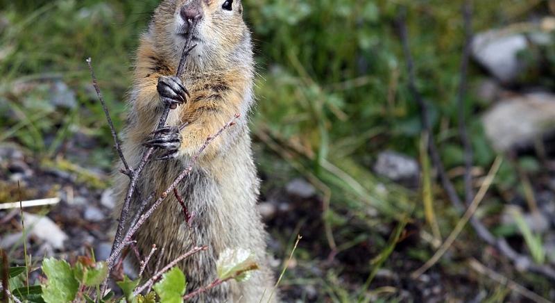 Bolzano: condannati a 1MLN euro per aver autorizzato uccisione animali protetti