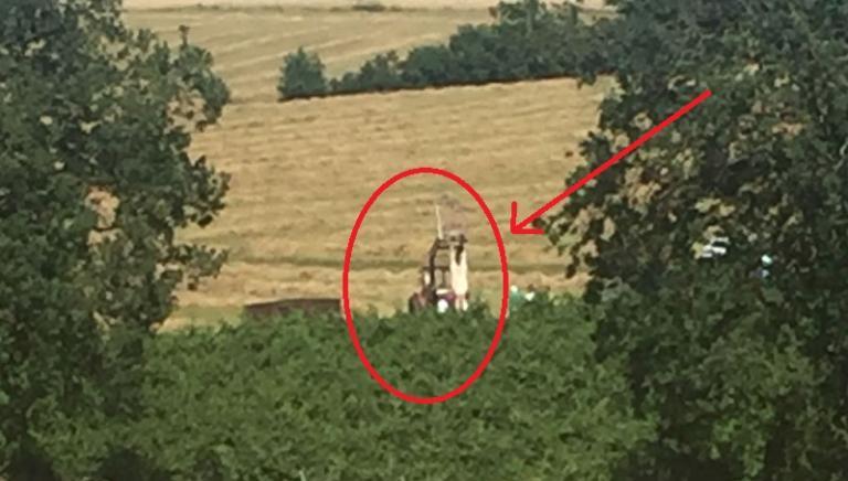 Forlì, uccisa mucca fuggita da allevamento. Perché non è stata salvata?