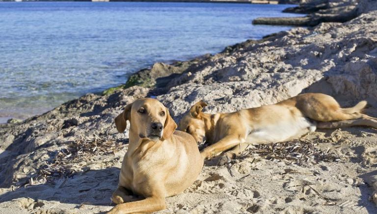 I Cani di Lampedusa: al via il progetto!