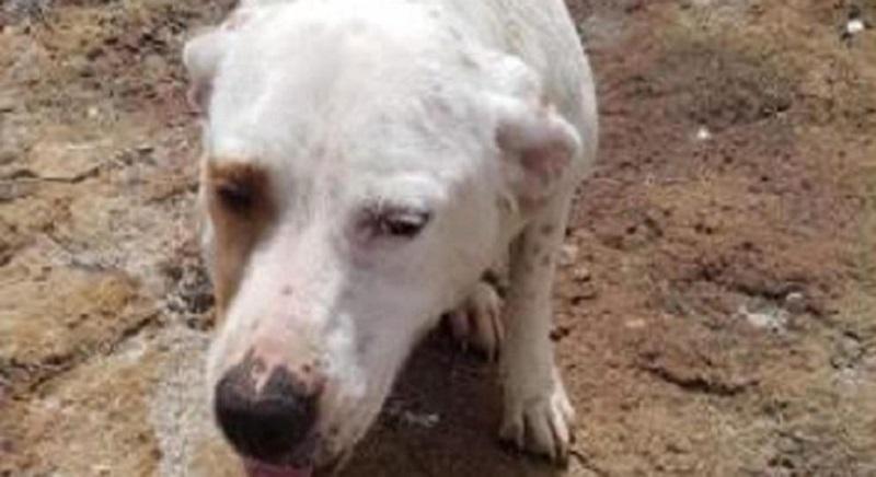 Mia, cagnolina gettata in mare con una pietra al collo: urgenti pene più severe!