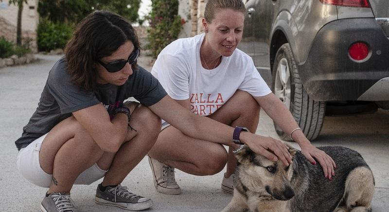 """""""Progetto Isola"""" non va in vacanza: le nuove attività per i cani di Lampedusa"""