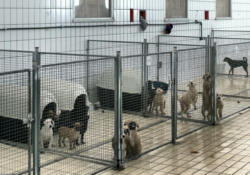Canile Palermo: STOP del vicesindaco a spedizione cani verso canili privati