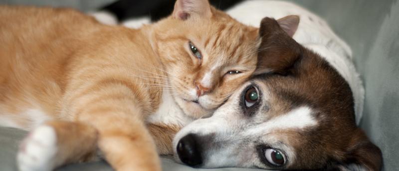 Prendersi cura di cani e gatti