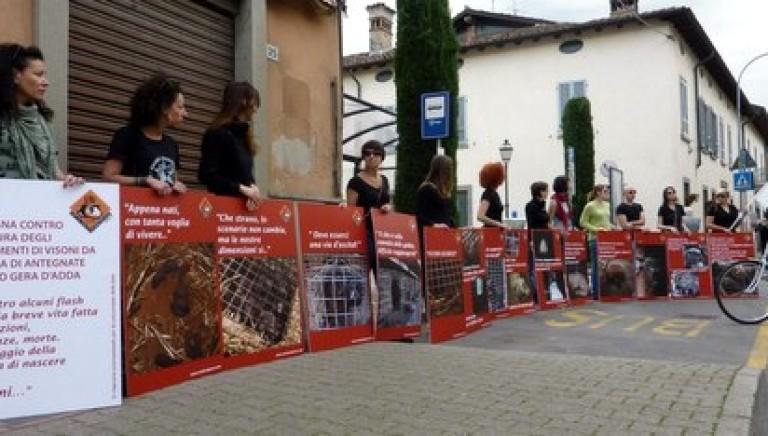 Pellicce, LAV in piazza: No a nuovi allevamenti