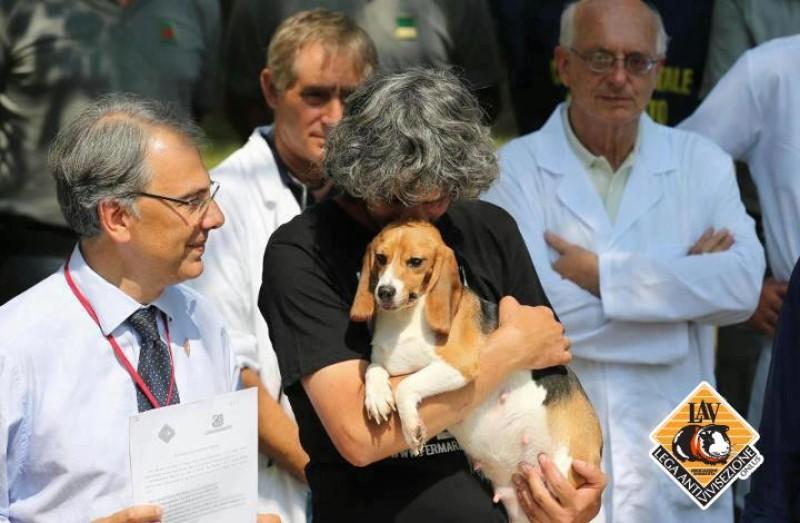 Beagle liberazione Green Hill -Foto LAV