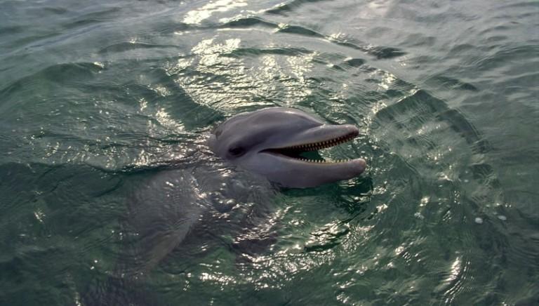 Sequestrati dalla Procura i delfini di Rimini!