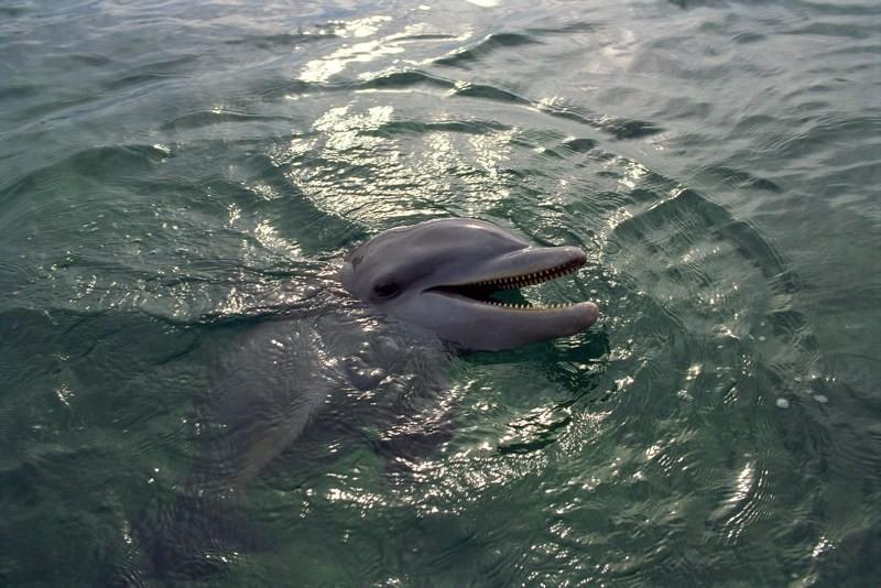 Delfino luce mare