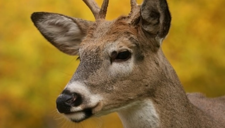 Domenica si apre la caccia,  attività crudele e anacronistica