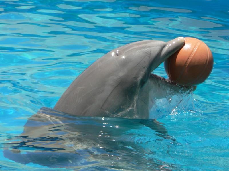 Delfino con la palla
