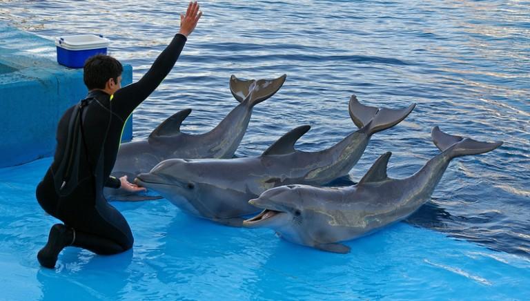 Rimini, inammissibile il ricorso dei titolari del delfinario!