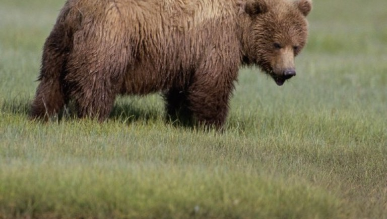 Ucciso l'orso M2, una taglia per i responsabili