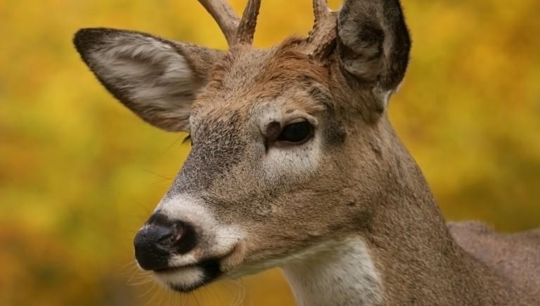 Massacro di cervi a Sondrio, la nostra diffida alla Provincia