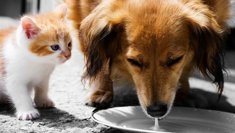 Abruzzo, proposta di legge per la soppressione dei cani su richiesta
