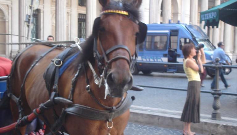 Trapani non ha bisogno delle carrozze con i cavalli