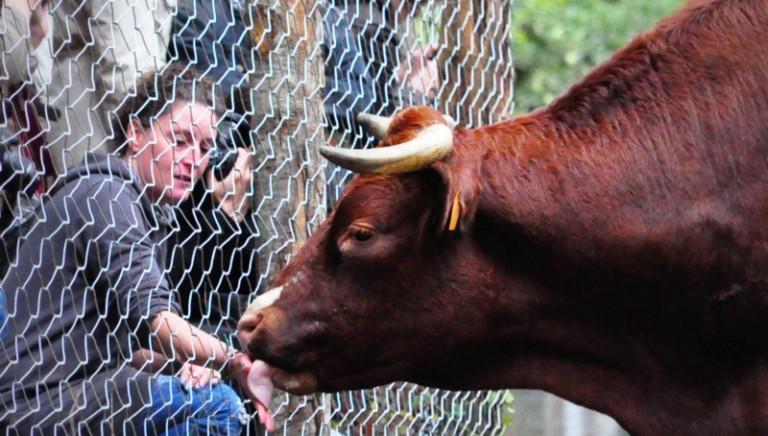 In mezzo agli animali salvati: una giornata a Semproniano