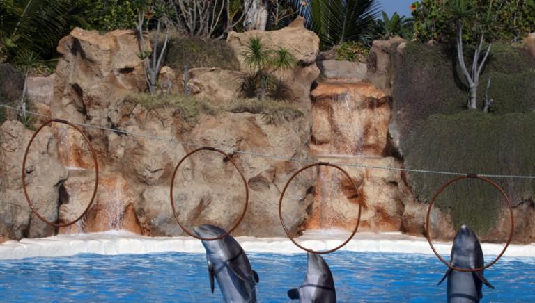 Napolitano elogia il CFS: parole sul delfinario Rimini e la lotta ai maltrattamenti di animali