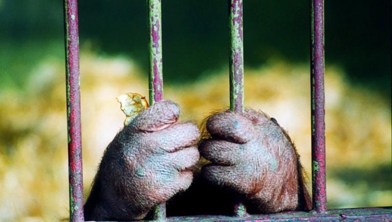 Animali, di diritto nella nostra Costituzione!
