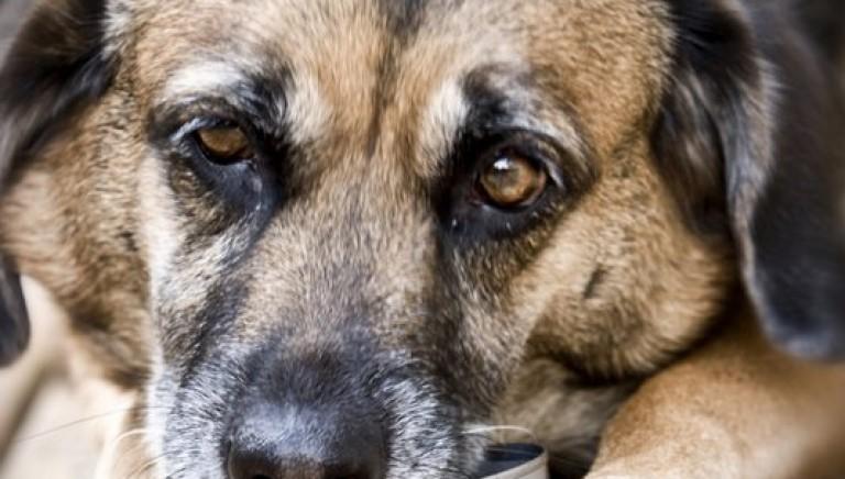Legge sul randagismo: Abruzzo non sia maglia nera per la tutela degli animali!
