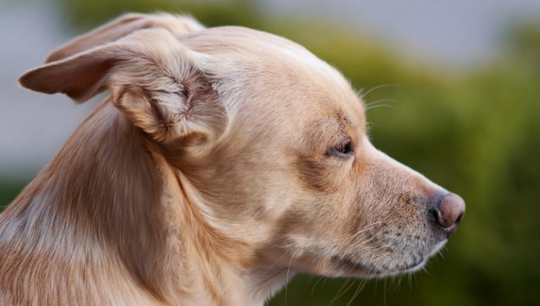 Bosnia, primo sì all'eutanasia per i cani. Ma non tutto è perduto!