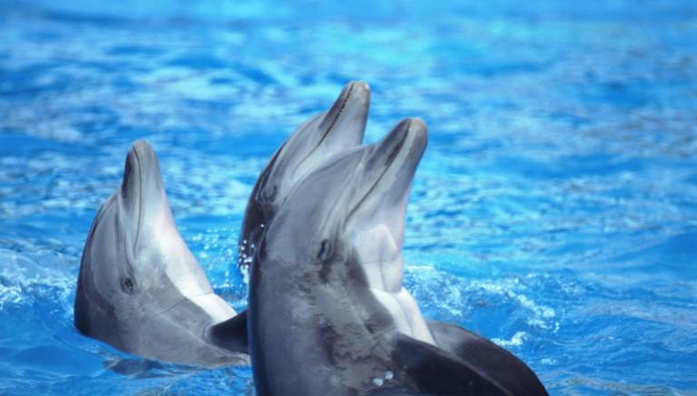 Sofferenza nei delfinari: la nostra investigazione