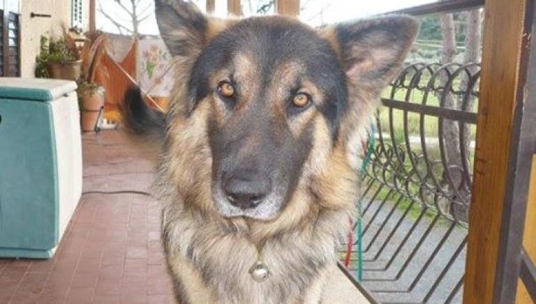 Argo, il cane ucciso da un cacciatore