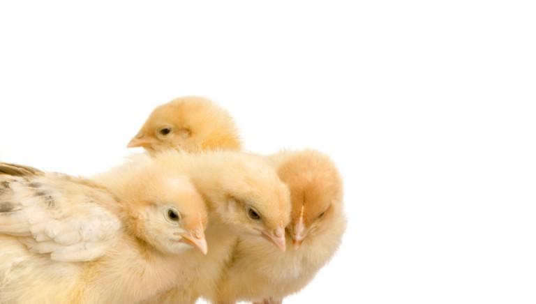 Il Governo si impegna: nelle scuole i diritti degli animali!