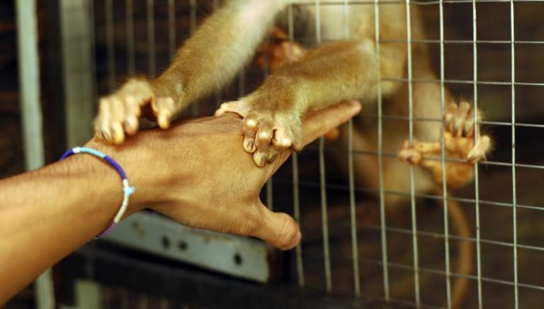 """""""La vivisezione non esiste"""""""