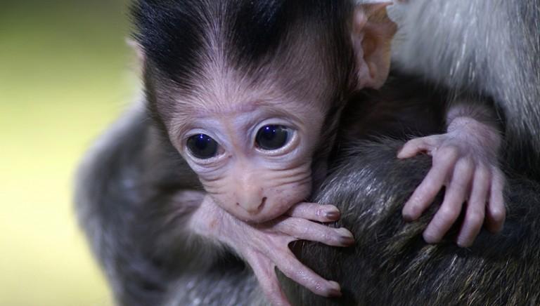 Sperimentazione animale, 70 mld dalla UE per la ricerca etica!