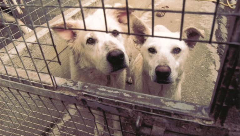 """Abruzzo, approvata norma randagismo: non è più una legge """"ammazza-cani"""""""