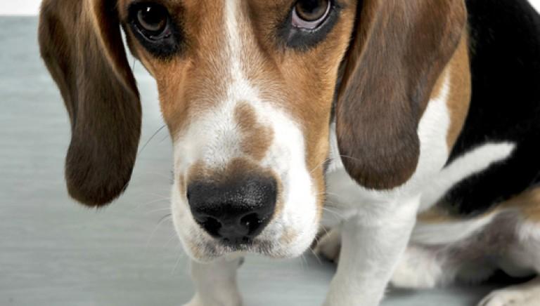 3 miti da sfatare sulla vivisezione in Italia