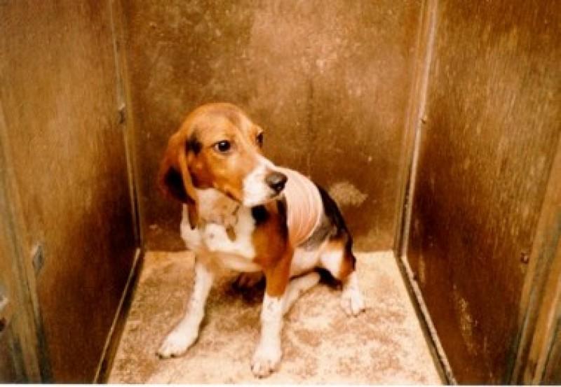 Ministro Lorenzin, riscriva lo schema di decreto sulla sperimentazione animale!