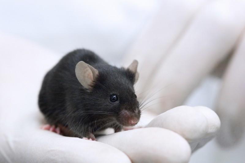 La vivisezione in Italia regione per regione